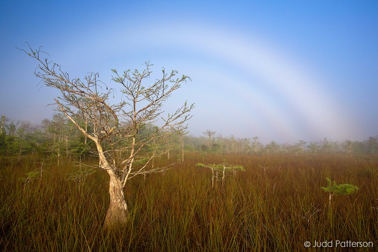 Fogbow, Everglades National Park, Florida, United States