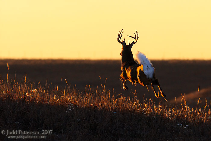 Leaping into the Light, Konza Prairie, Kansas, United States